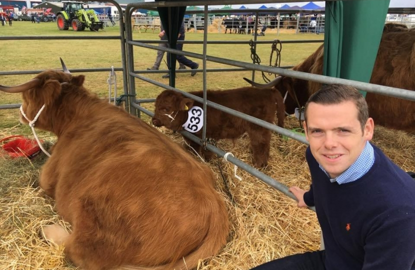 Douglas Ross MP with Highland Cow